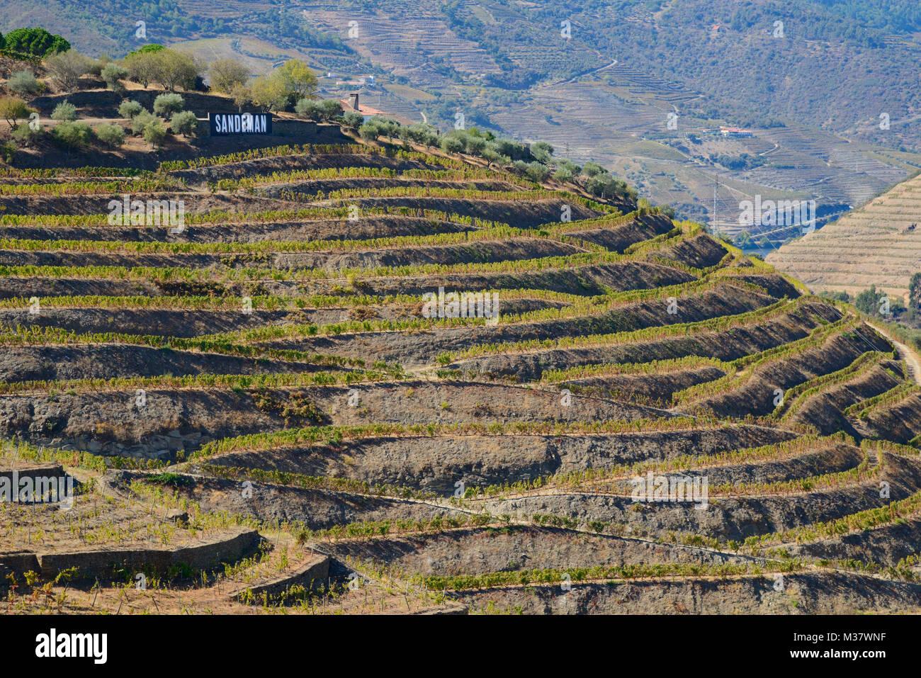 Porto Sandeman vigneti su terrazzamenti artificiali sulle colline ...