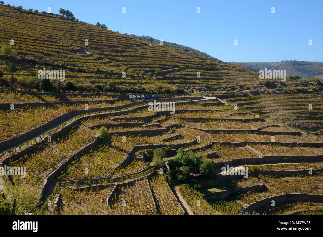 Vigneti su terrazzamenti artificiali sulle colline della Valle del ...