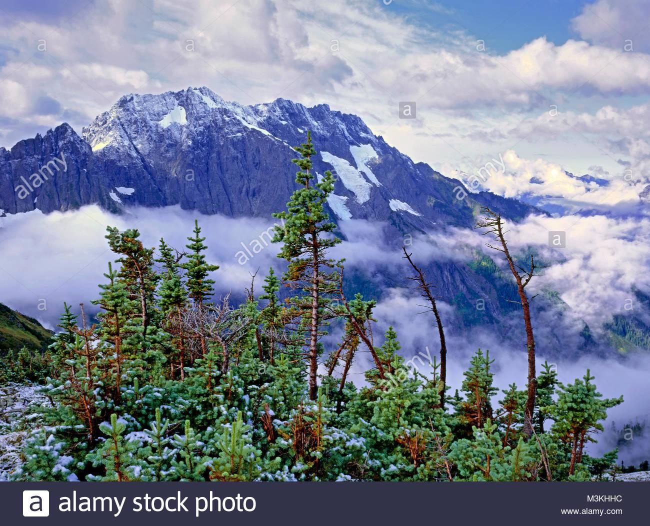 Subalpini di abete e cascata dal picco Sahale Arm, Parco Nazionale delle Cascate del Nord, Washington Immagini Stock