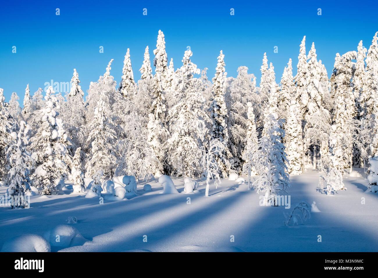 Snow-laden foreste del nord della Finlandia Immagini Stock