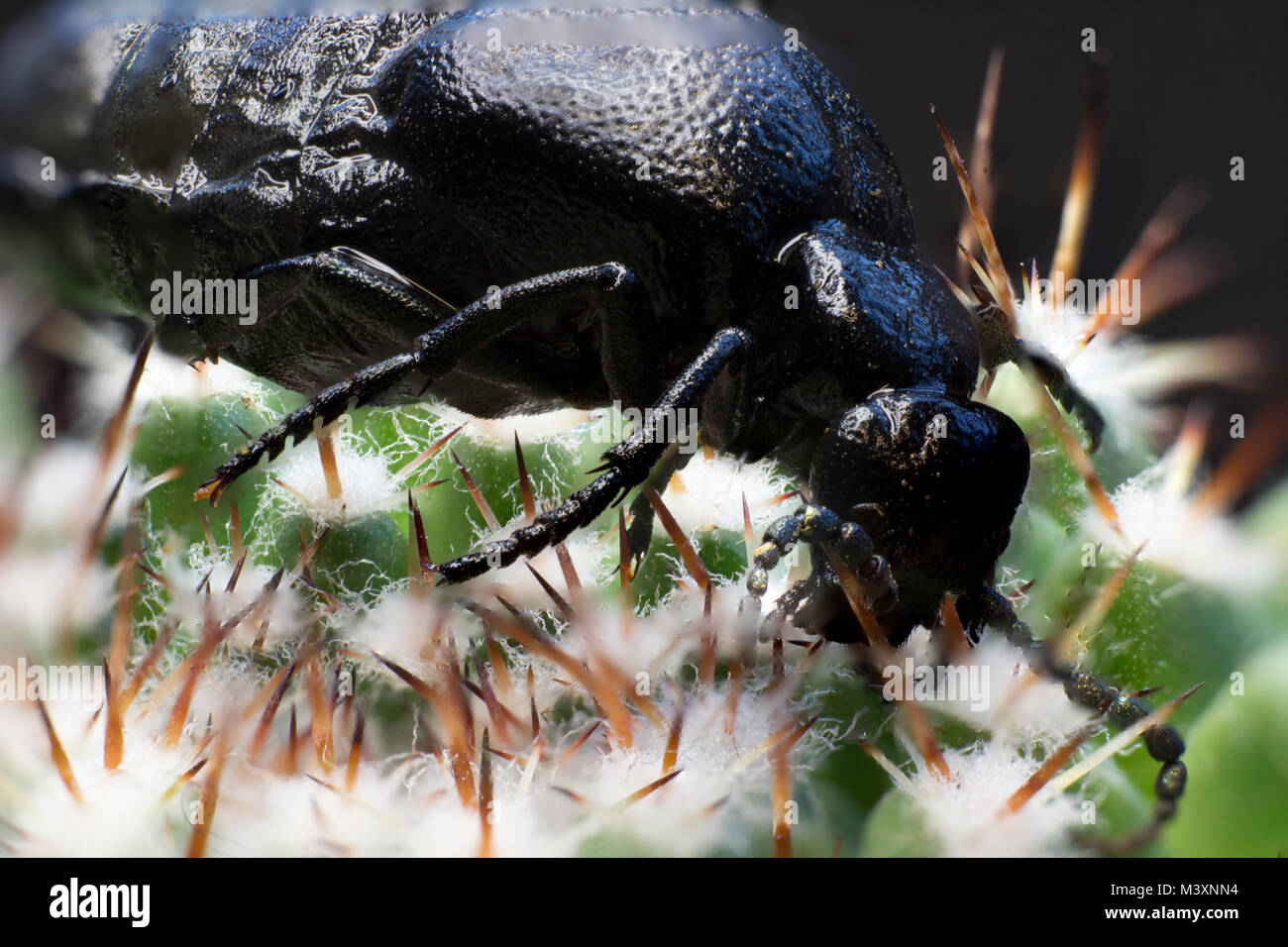 bug bottino tubo