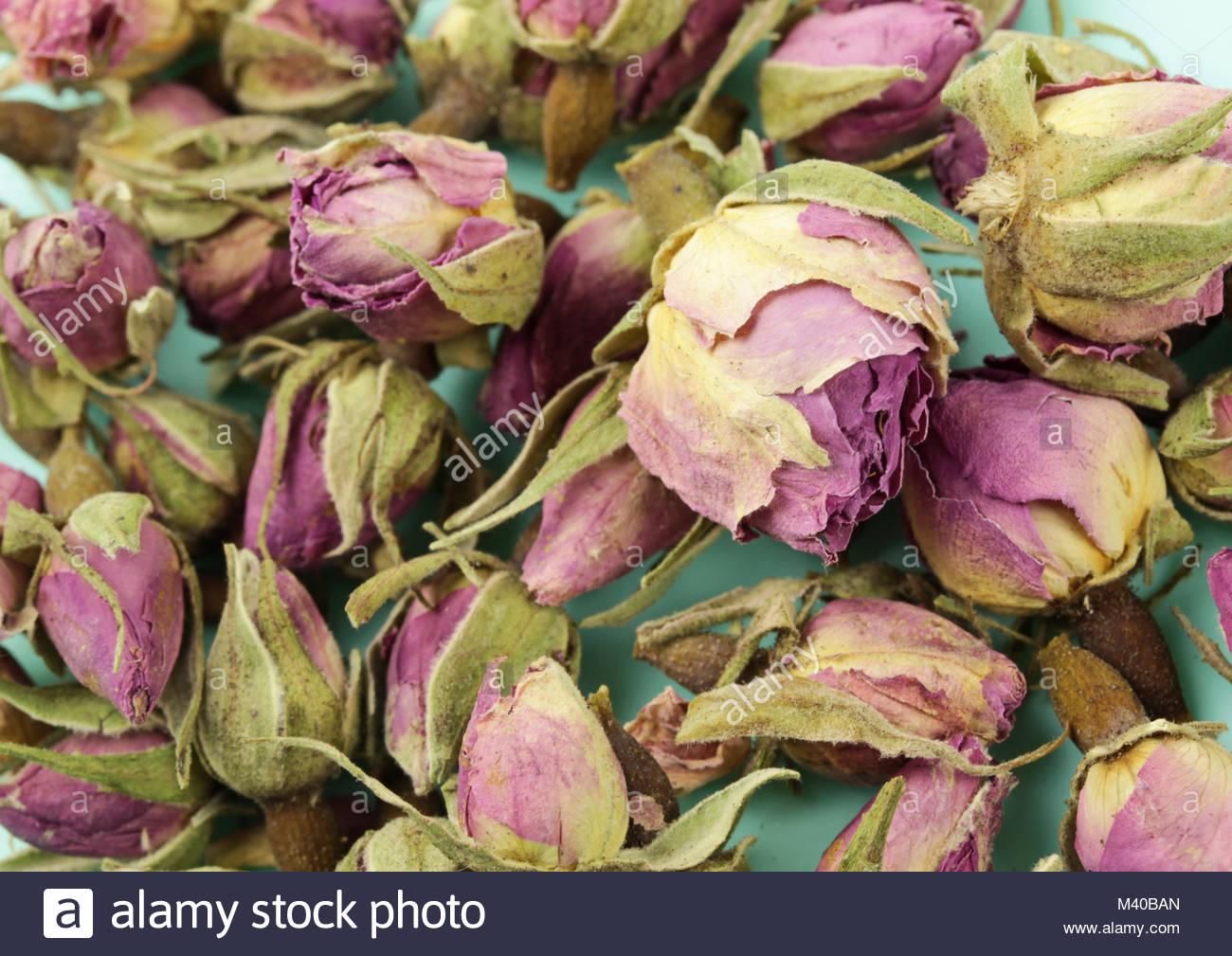 Rosa essiccati petali di rosa - Sfondo blu Immagini Stock