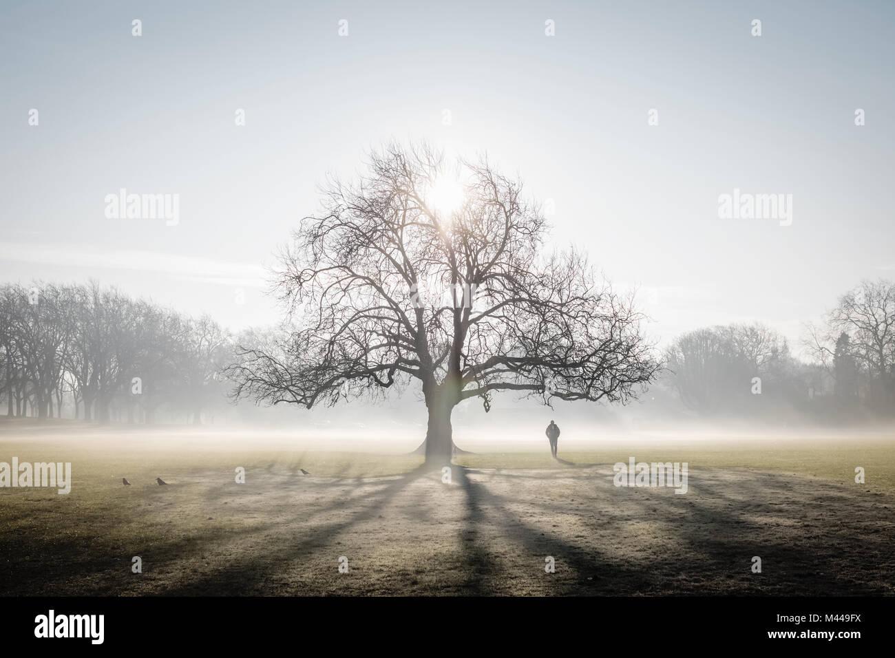 Lone Tree sul frosty Peckham Rye Common, Londra Immagini Stock