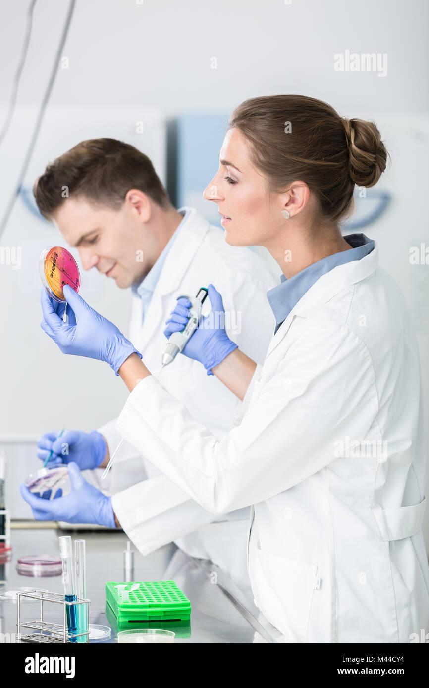 Gli scienziati di test alimentari test di laboratorio di inquinamento di germe di petri p Immagini Stock