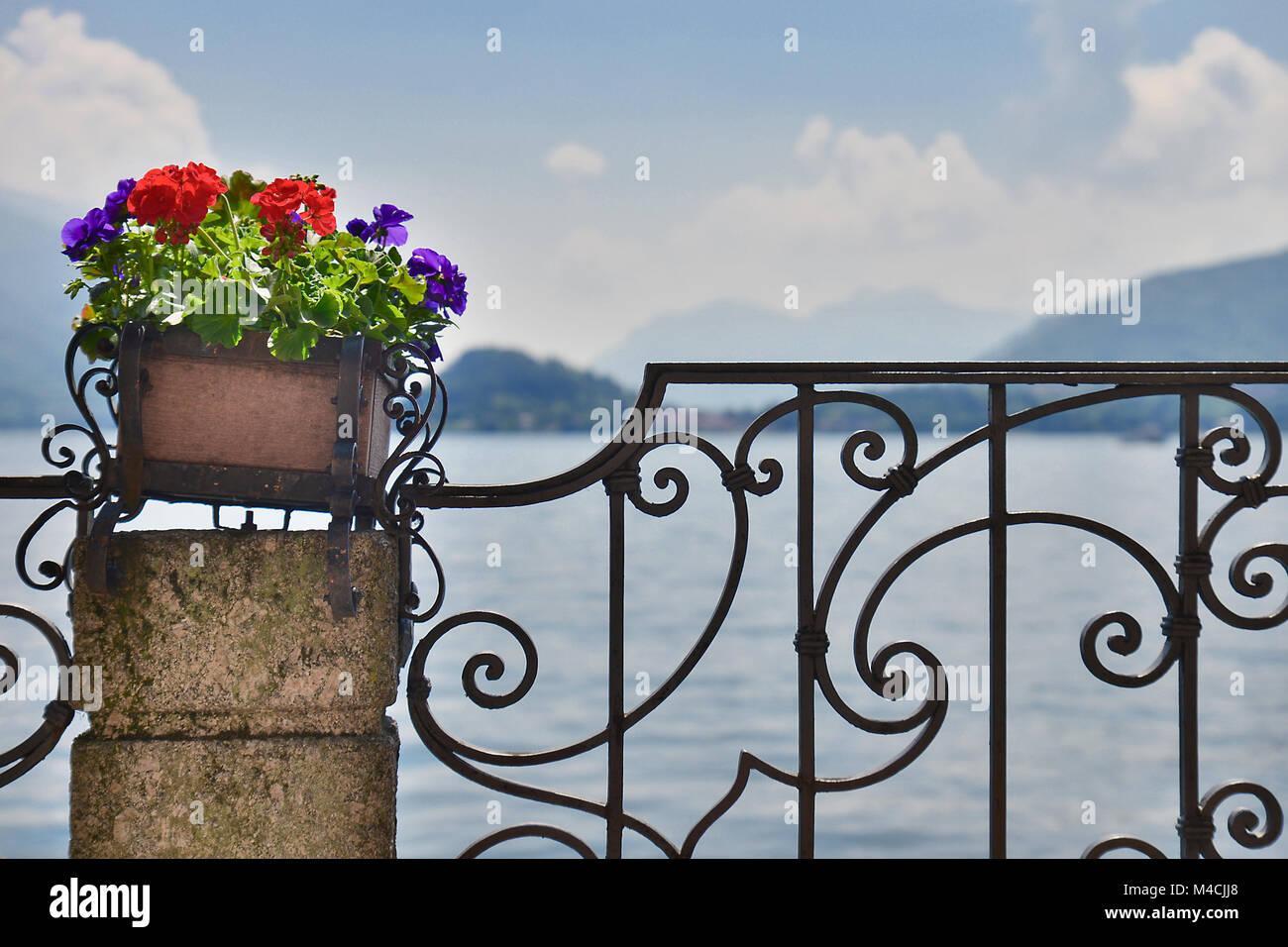 Colorati D Azzurro Chiaro fiori colorati su un palo di pietra e recinzione in ferro in