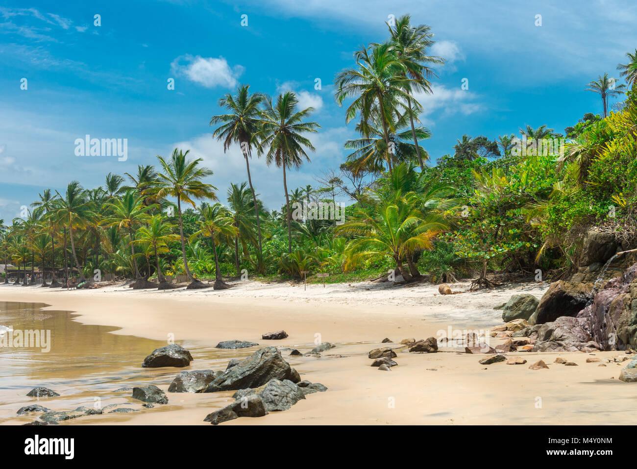 Bellissima spiaggia natura vicino a Itacare in Bahia Immagini Stock