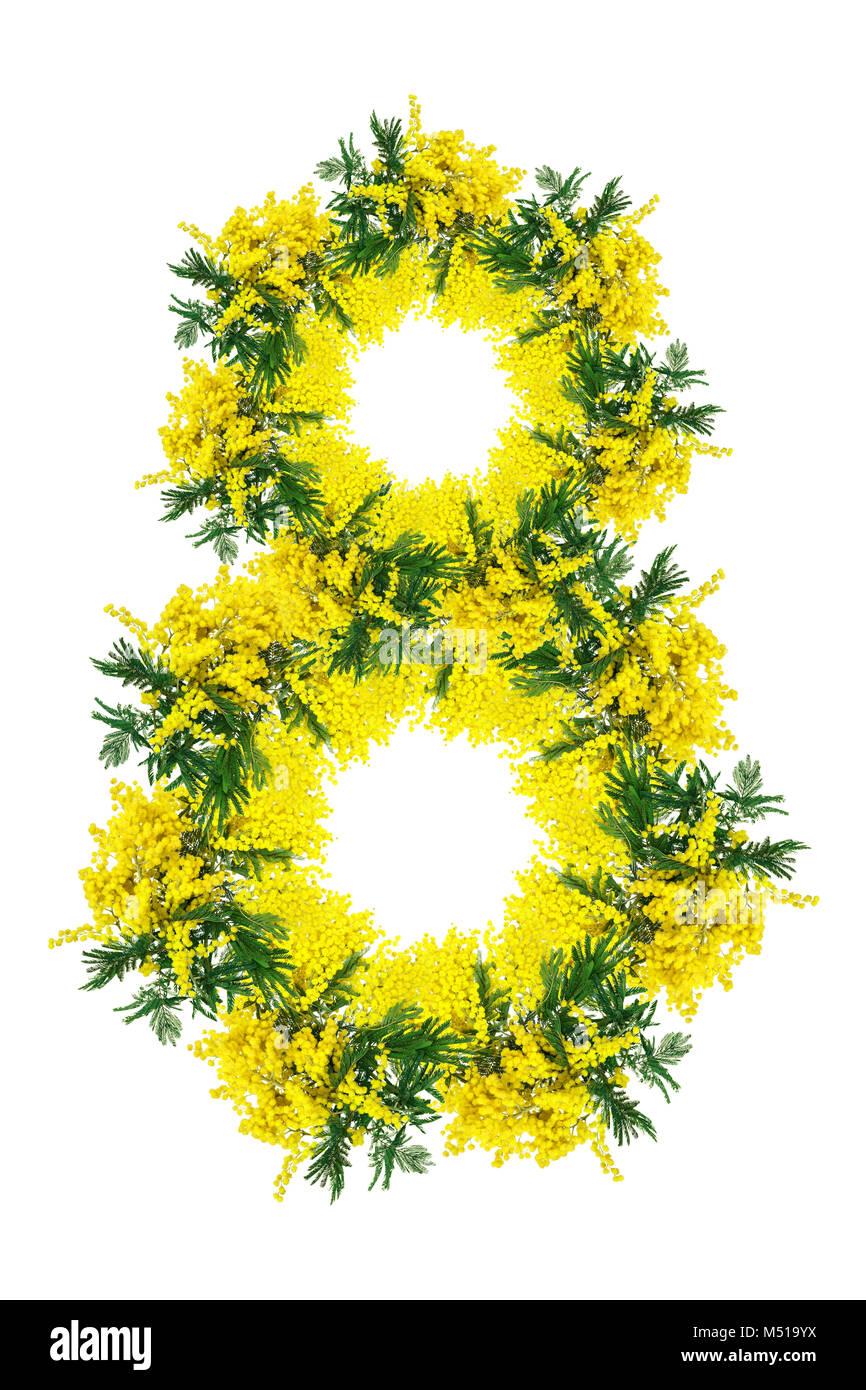 Fiori 8 Marzo.Fiore Mimosa Circlet Blossom Isolati Su Sfondo Bianco Numero Otto