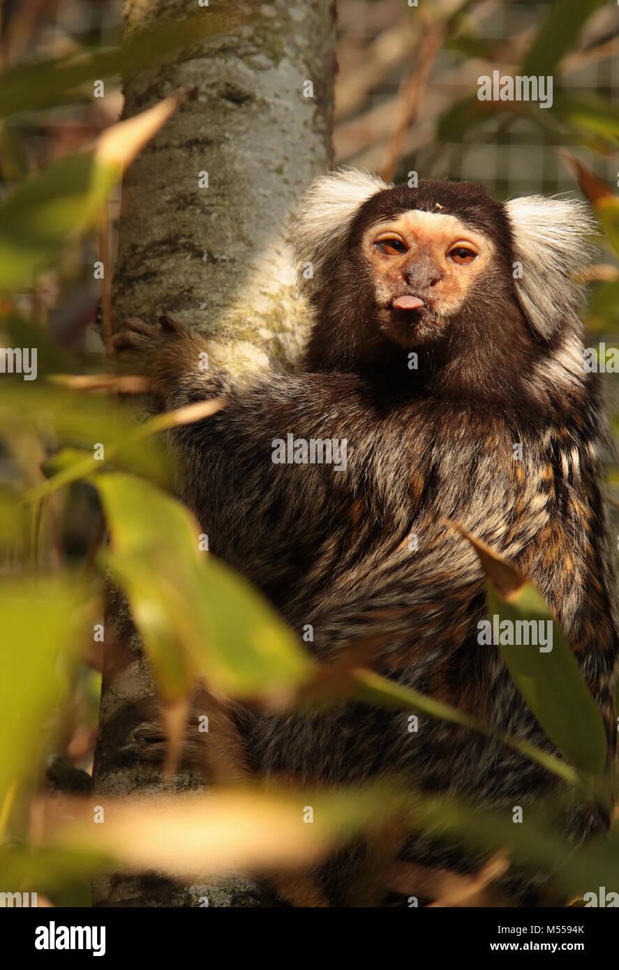 Monkey business Immagini Stock
