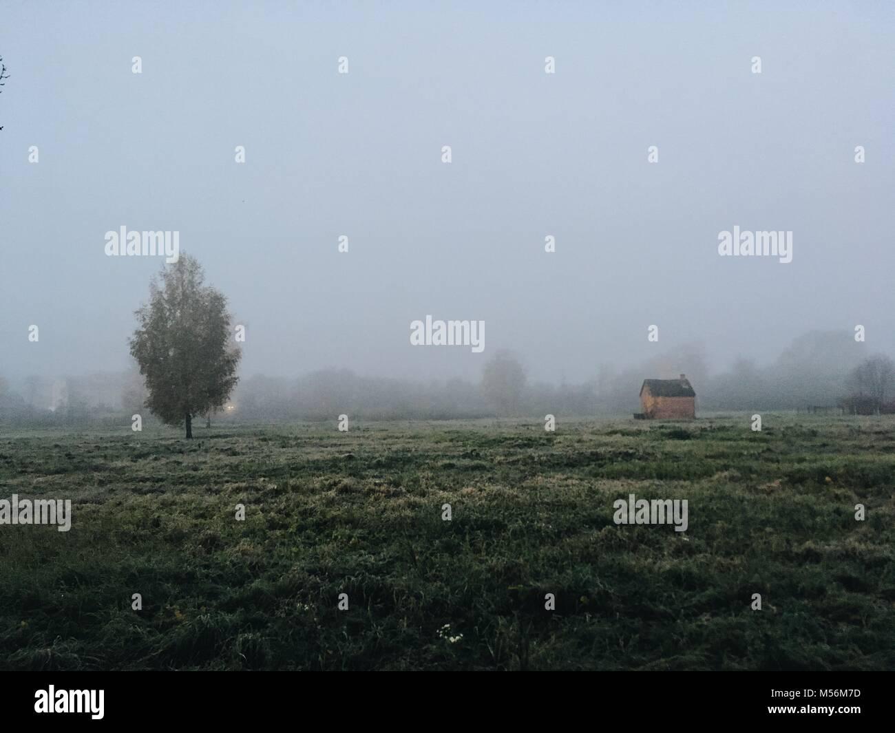 Campo d'erba. Bella mattinata nebbiosa scena con un piccolo capannone. Immagini Stock