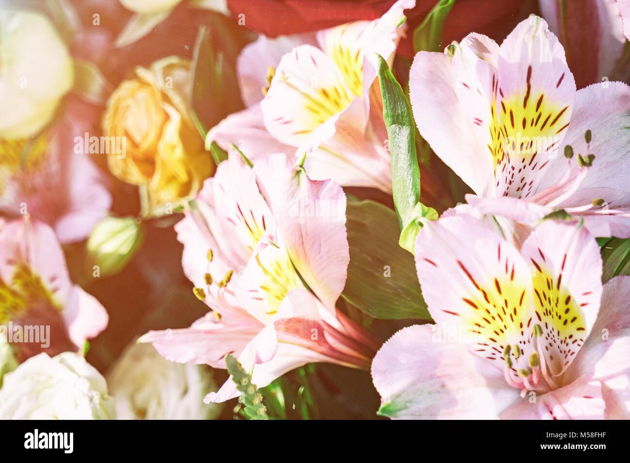 Fiori Bellissimi Gigli Rosa In Un Mazzo Di Fiori Foto