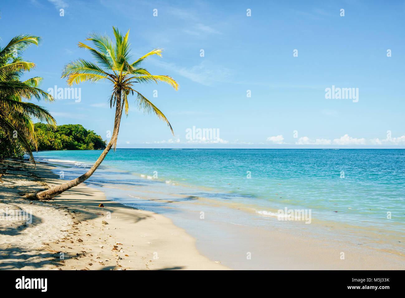 Costa Rica, Limon, spiaggia con Palm tree nel parco nazionale di Cahuita Immagini Stock