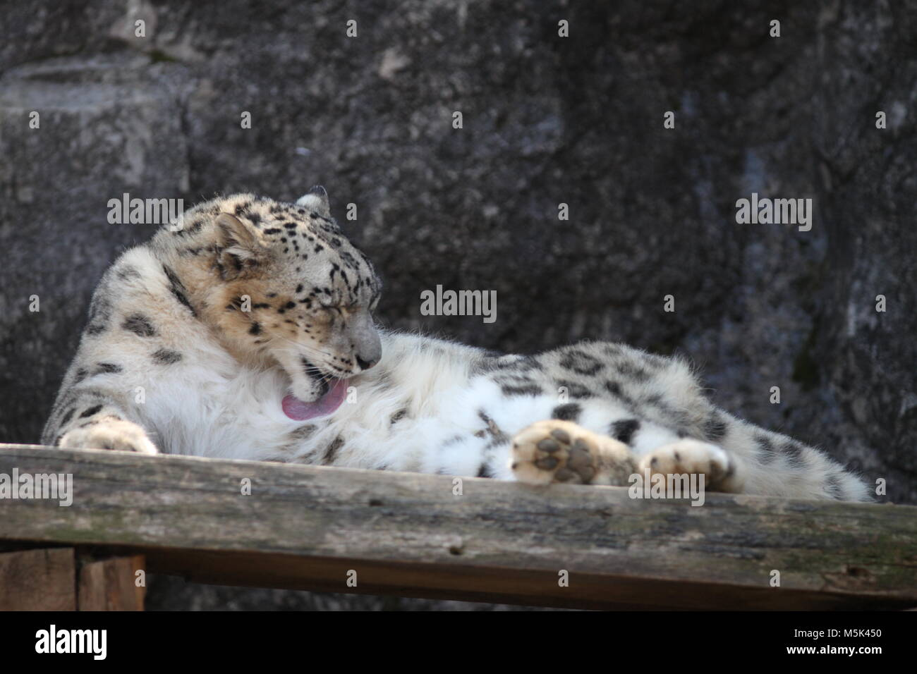 Tama Zoological Park,Tokyo Immagini Stock