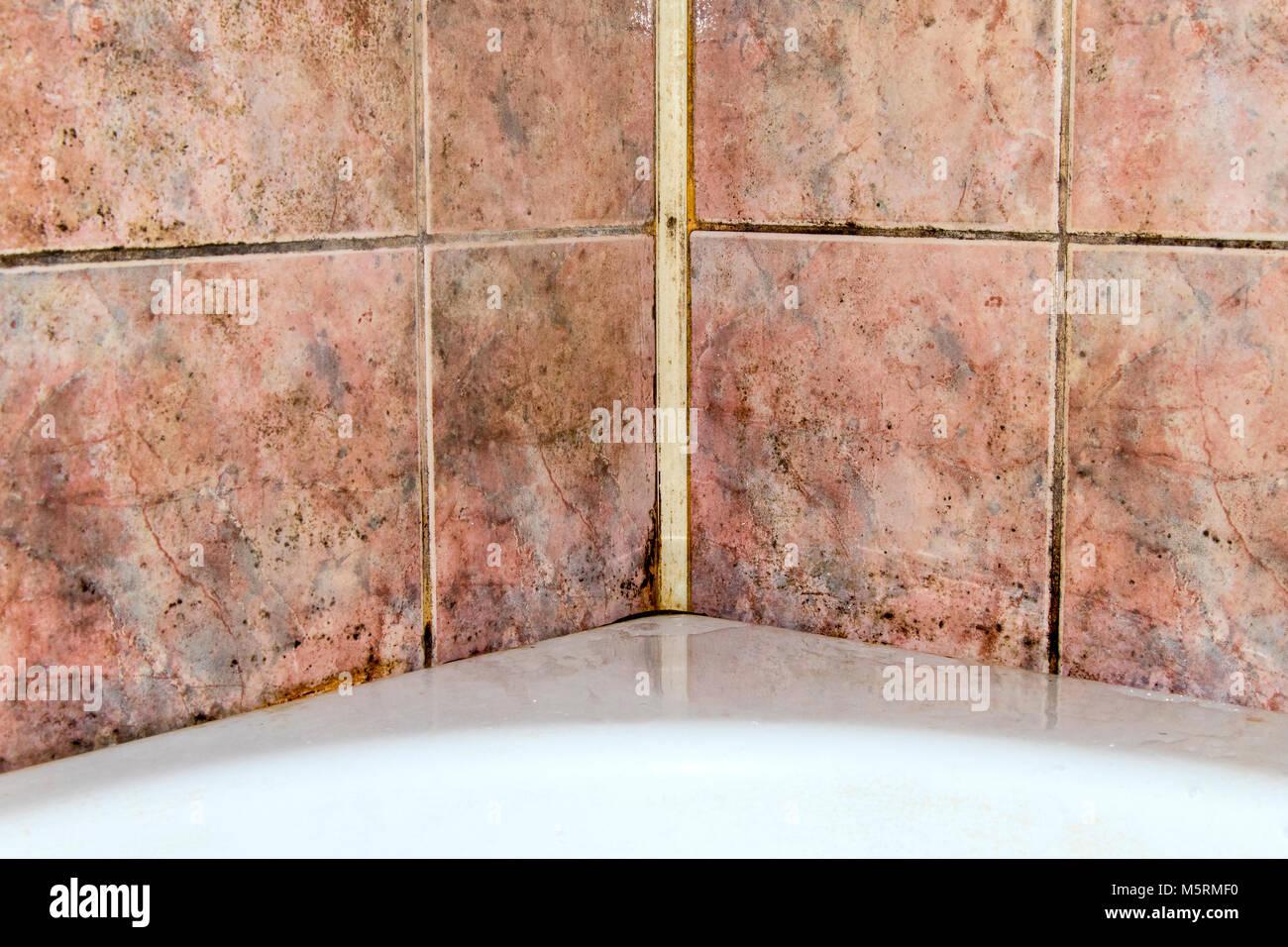Fungo in bagno la pulizia di piastrelle da infezione foto