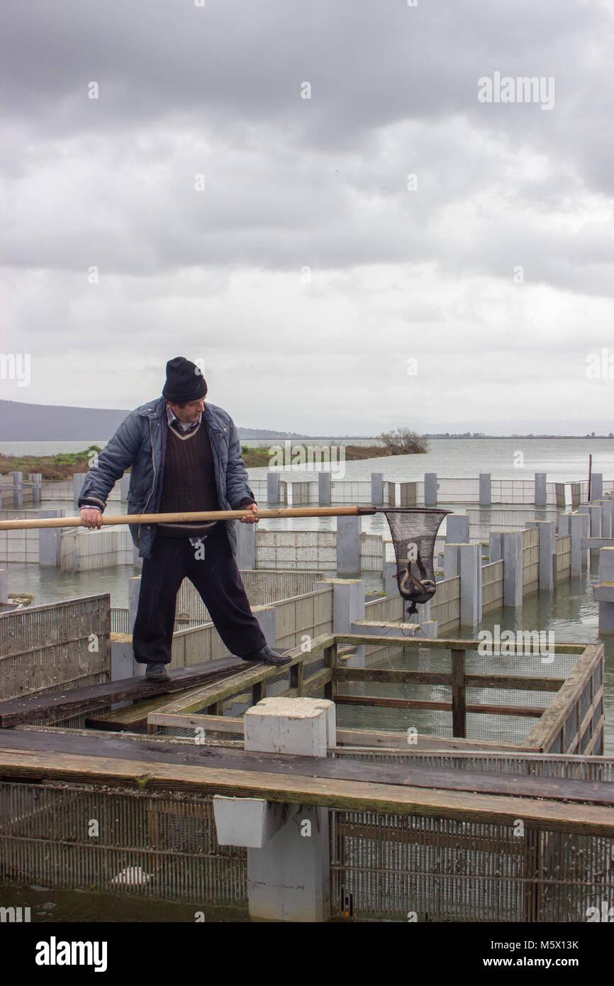 Pescatore professionista la cattura di anguille da loro trappole utilizzando una rete Immagini Stock