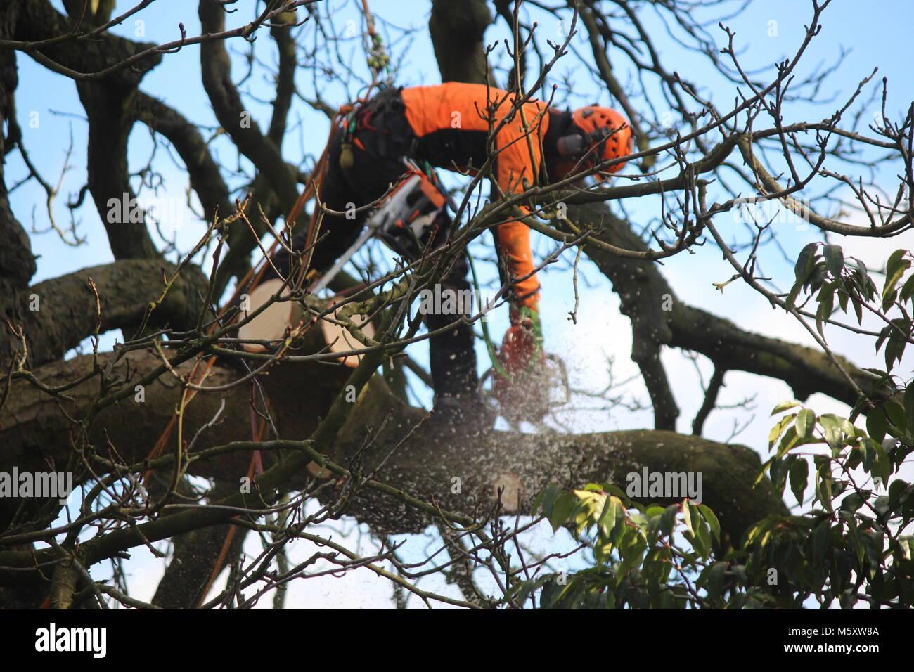 Tree chirurgo azionando la sua chainsaw in un albero attaccato alle corde di taglio i rami di grandi dimensioni Immagini Stock
