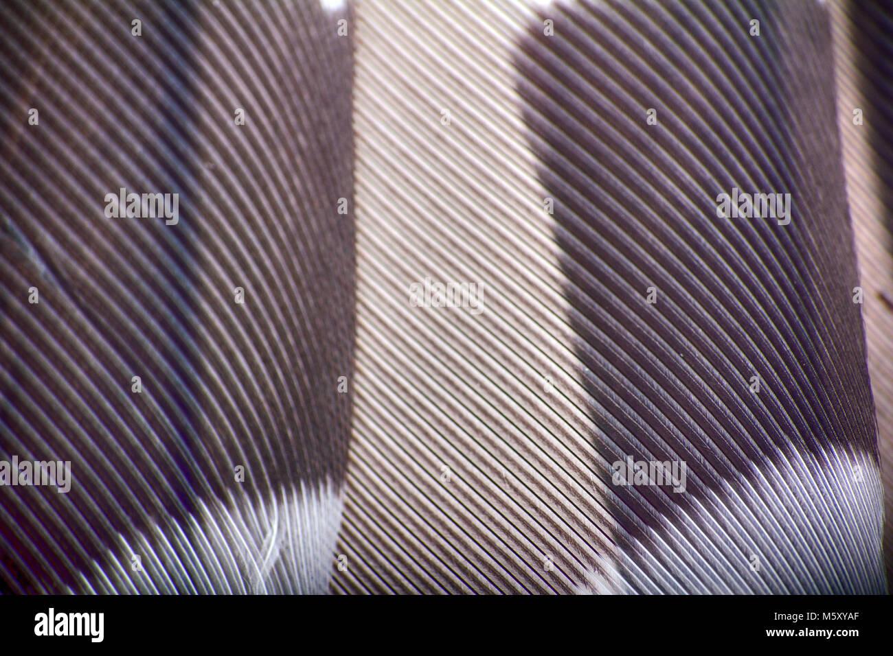 Grosgrain immagini & grosgrain fotos stock alamy