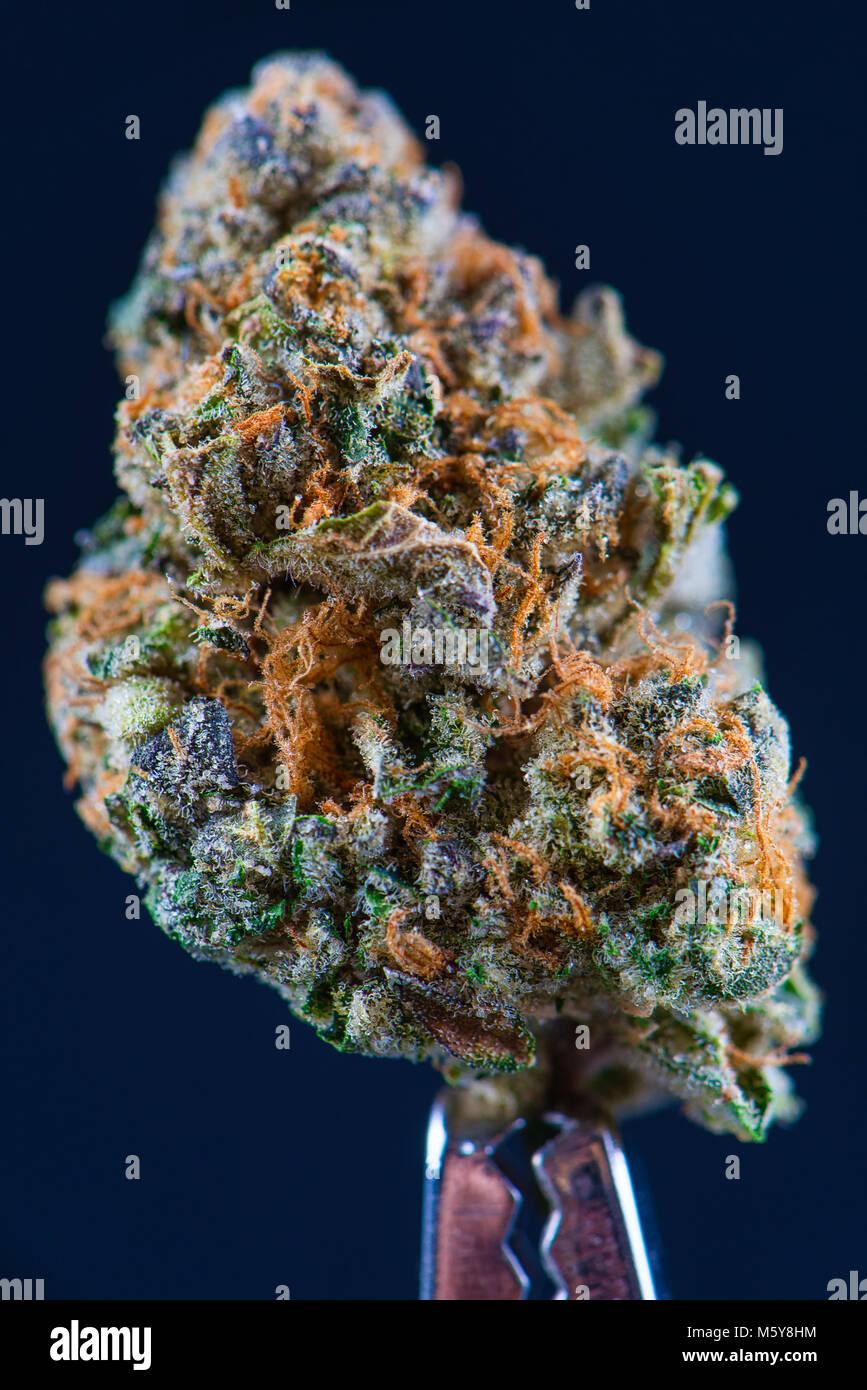 Forum марихуаной что вреднее марихуана или гашиш