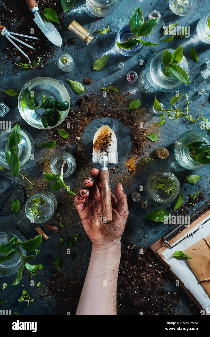 Pollice Verde concetto con un golden spade, piante, suolo, vasi di vetro con la piantina e utensili da giardinaggio. Immagini Stock