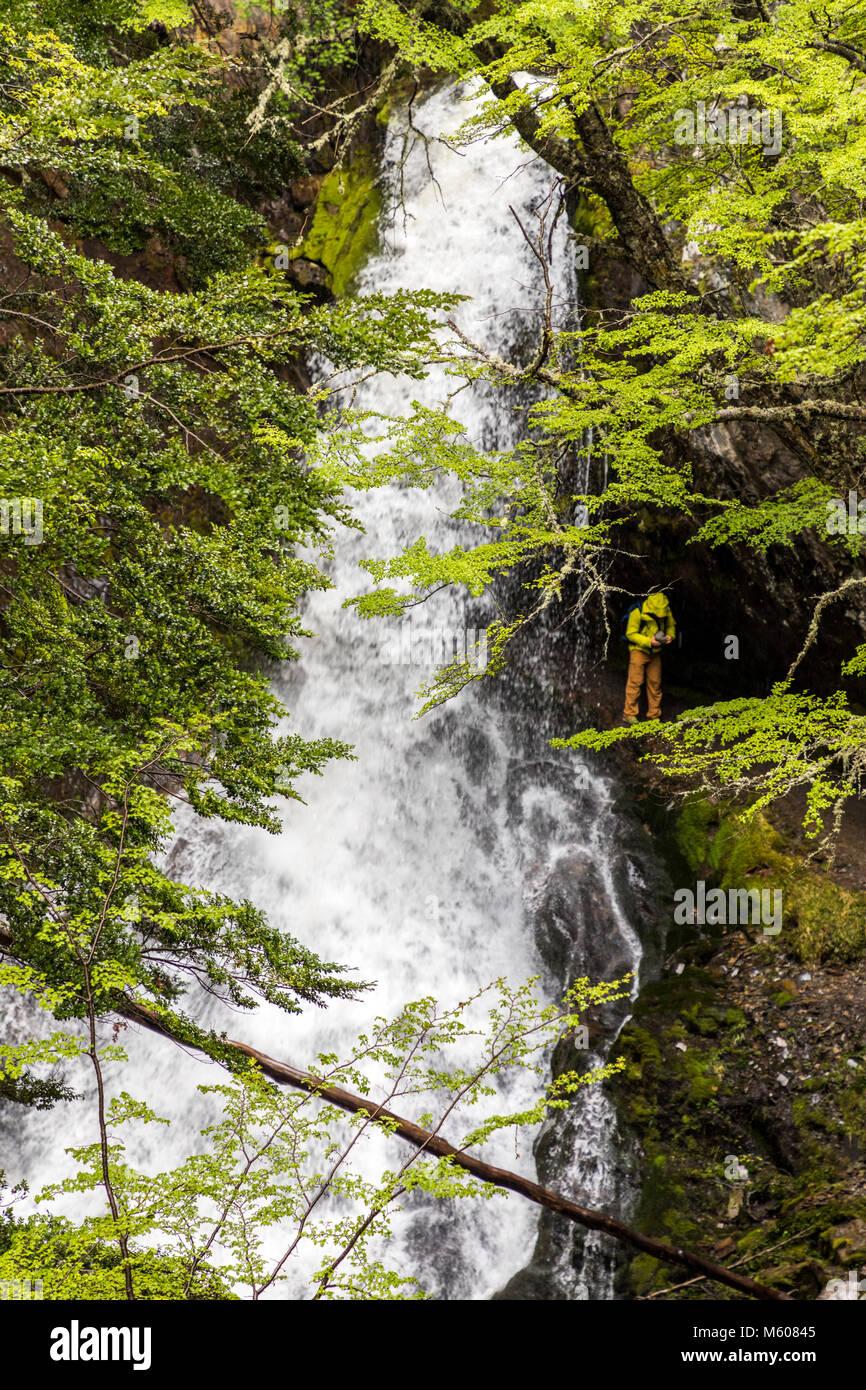 Escursionista esplora Sendero a La Cascada Velo de la Novia; Percorso del Velo de la Novia cascata; Ushuaia, Argentina Immagini Stock