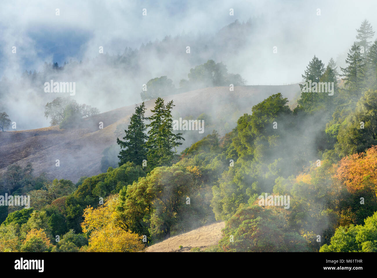Sollevamento di nebbia, Acorn Ranch, Yorkville Highlands, Mendocino County, California Foto Stock