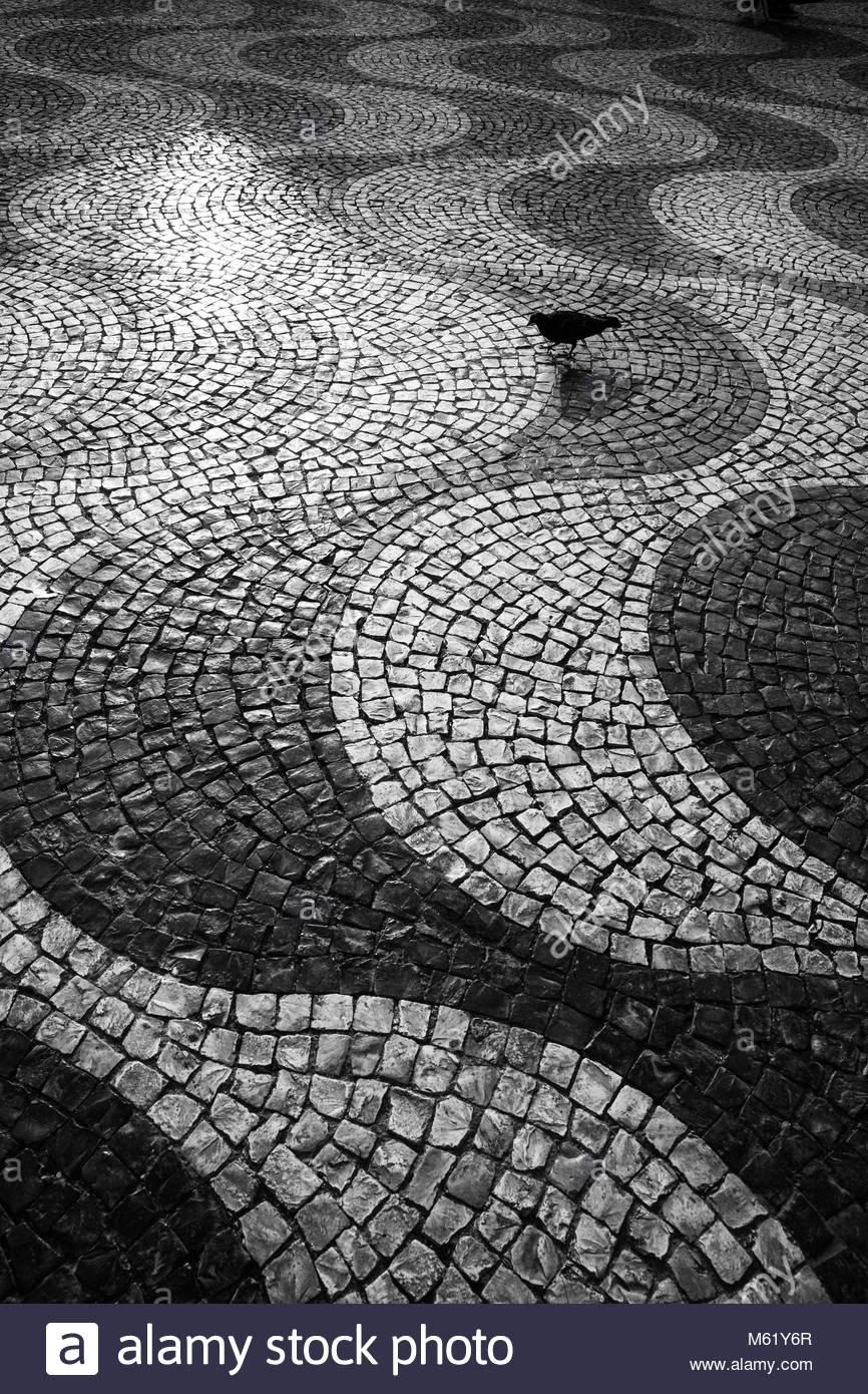 Un comune Colombaccio Columba Palumbuson, sulle piastrelle portoghesi di piazza Rossio al tramonto. Immagini Stock