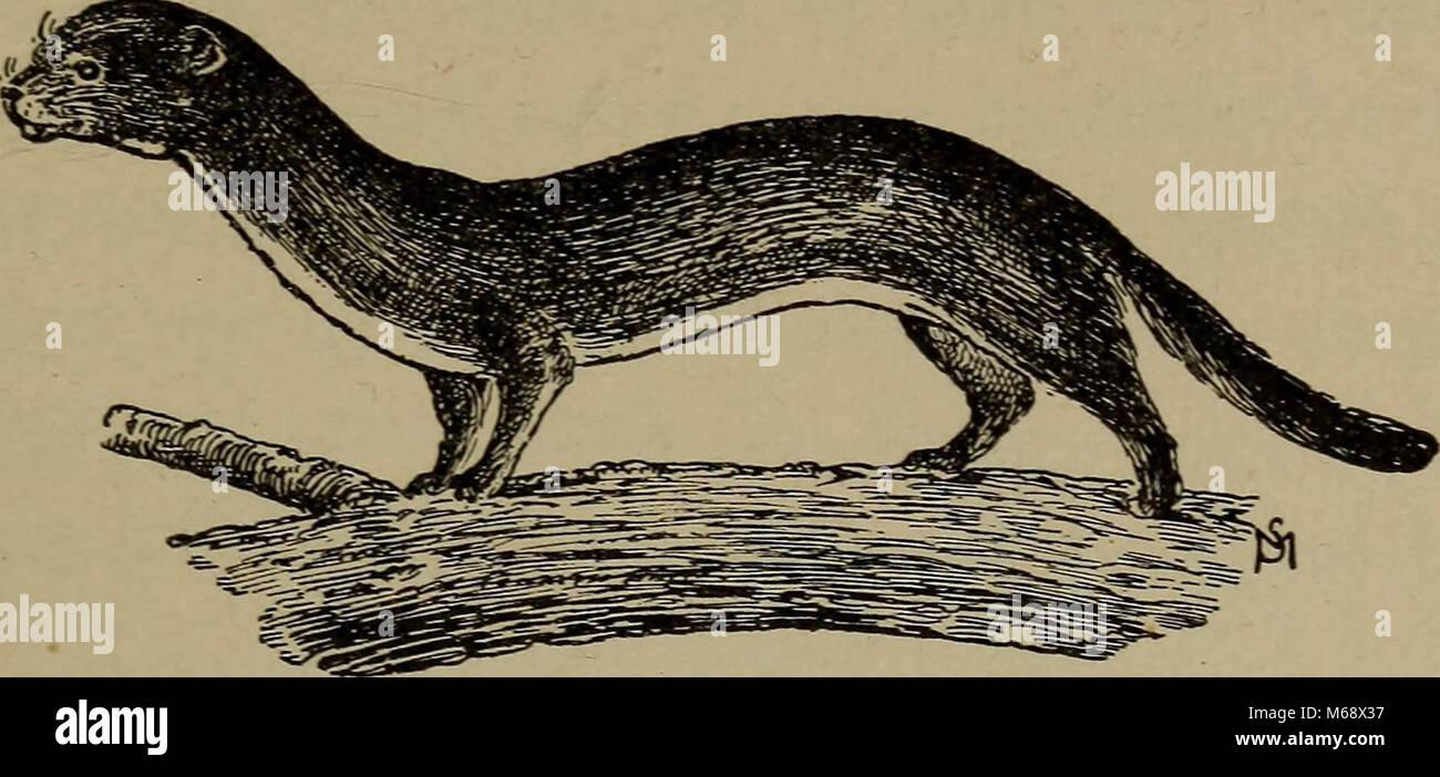 """""""La vita familiare in campo e del bosco; gli animali, uccelli, rane e salamandre"""" (1898) Foto Stock"""