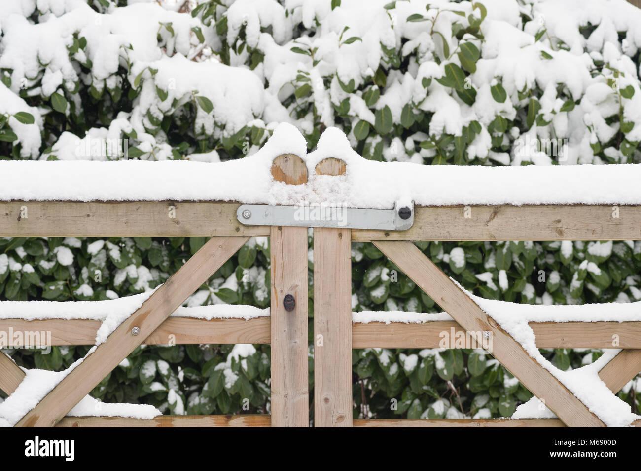 Doghe In Legno Per Cancelli : Congelati in legno a doghe di cinque bar cancello di ingresso