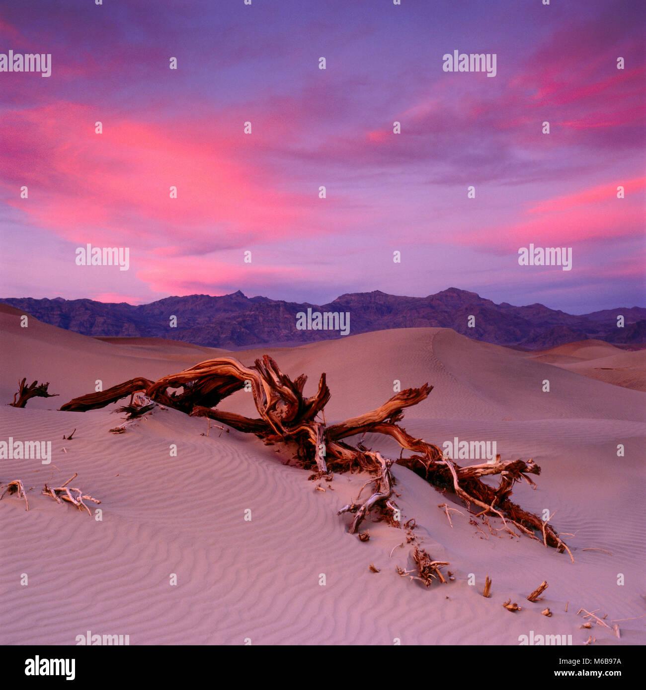 Sunset, tamerici, dune, Grapevine montagne, Parco Nazionale della Valle della Morte, California Immagini Stock