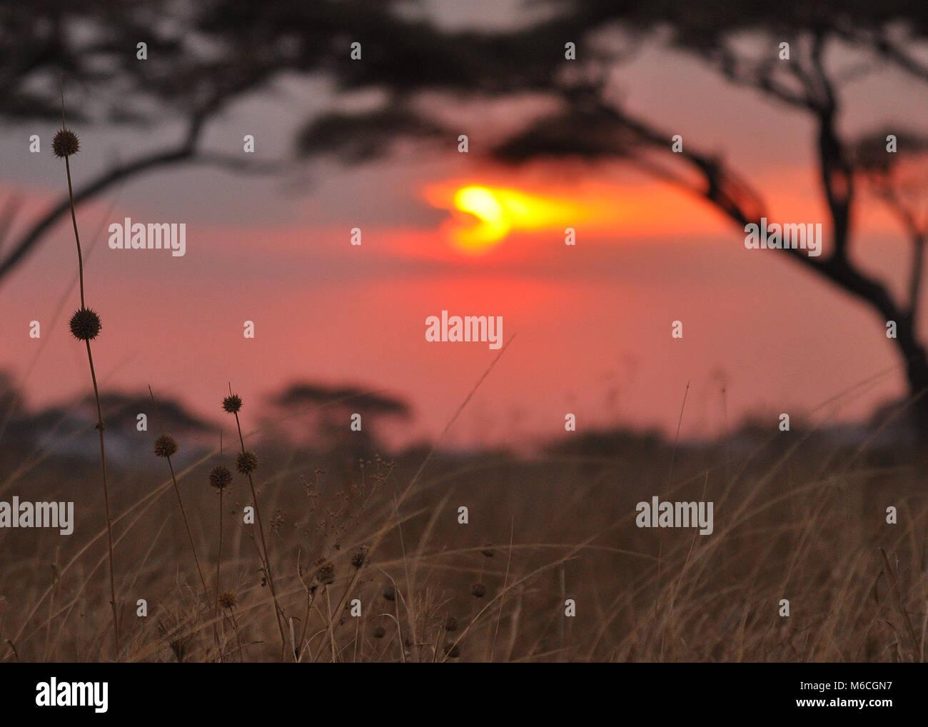Tramonto catturato nel parco nazionale del Serengeti, Tanzania. Immagini Stock