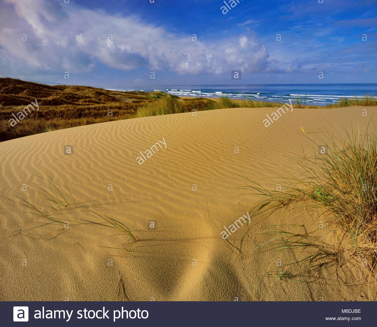 Dune, Stato Pismo Beach, San Luis Obispo County, California Immagini Stock