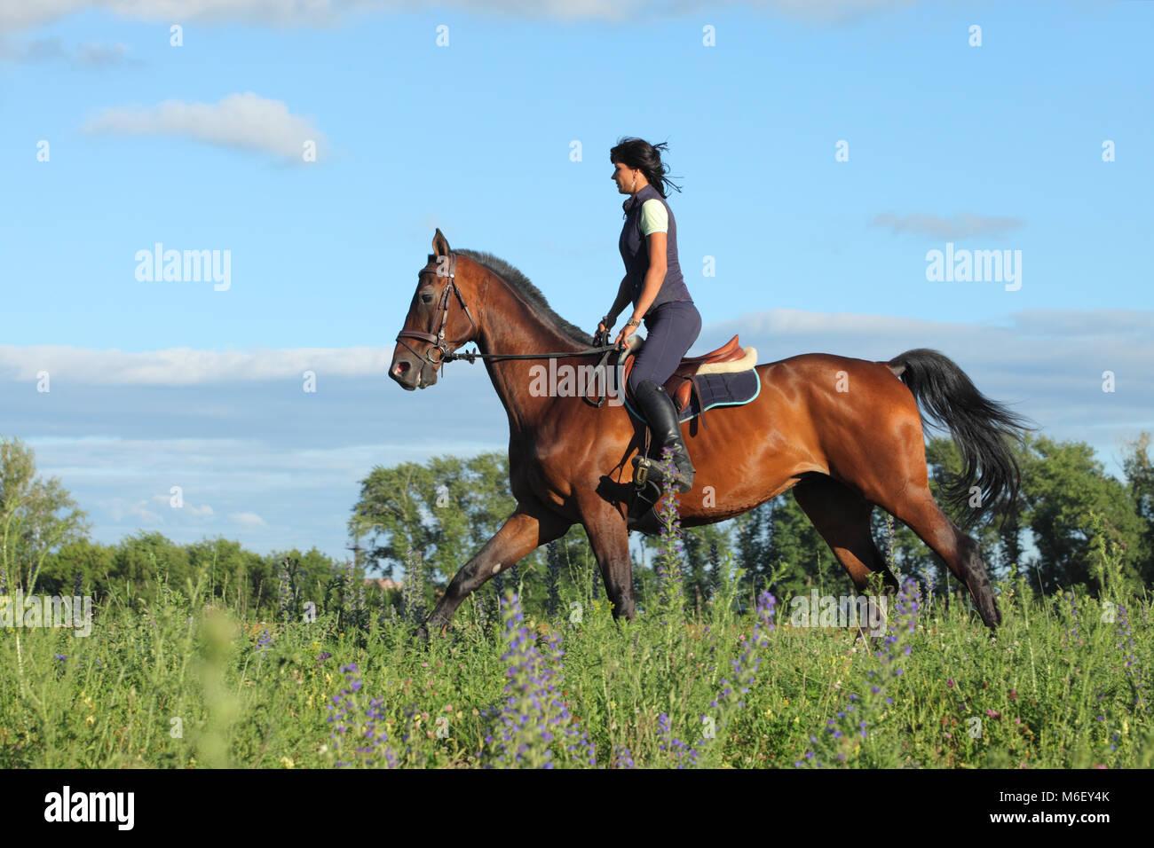 Cavallo al galoppo con pilota femmina Immagini Stock