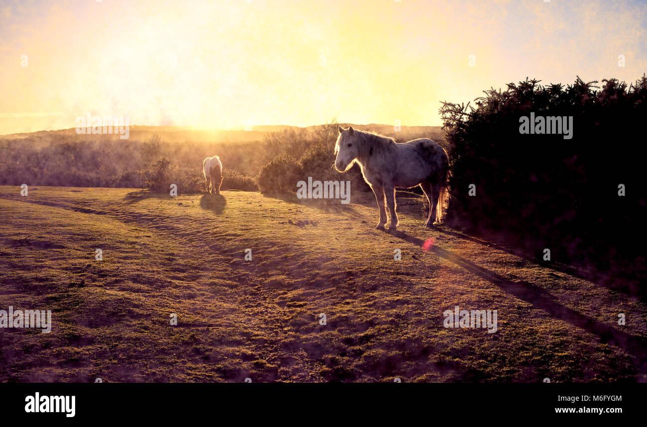 Una bella brumoso paesaggio sunrise attraverso la New Forest Hampshire Inghilterra con due new forest pony in primo Immagini Stock