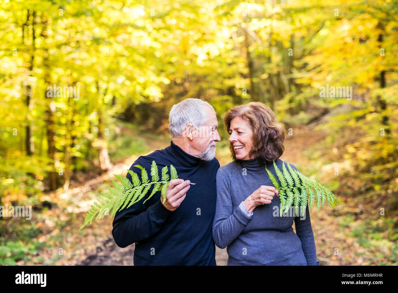 Coppia senior in una passeggiata nella foresta di autunno. Foto Stock