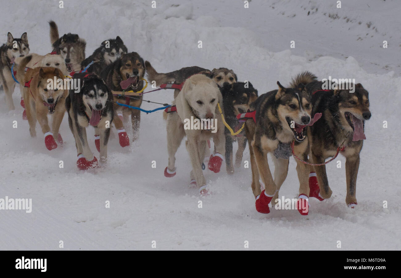 Sessanta-sette mushers ha dato dei calci a fuori la 46th annuale sentiero Iditarod Sled Dog Race con un 11-Mile Immagini Stock