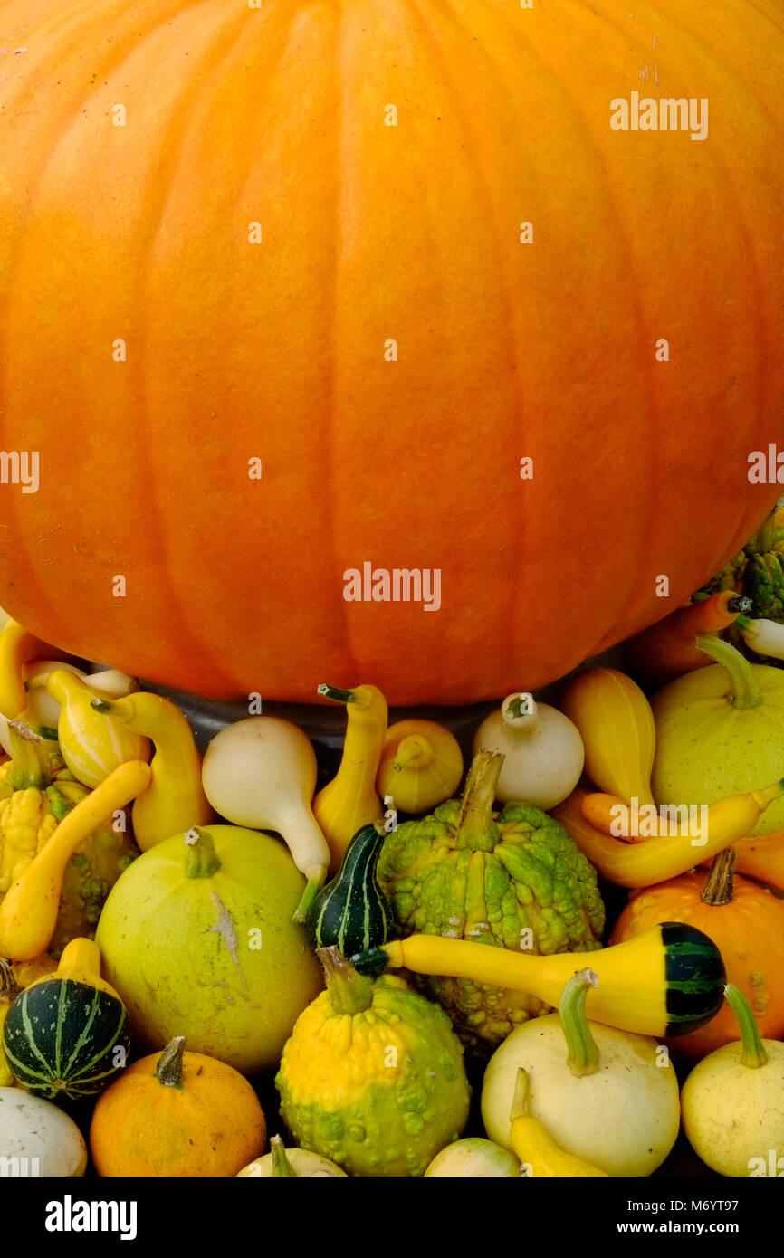 Essiccazione Zucca Di Halloween.La Zucca E Zucche Decorative Di Essiccazione Al Sole Foto Immagine