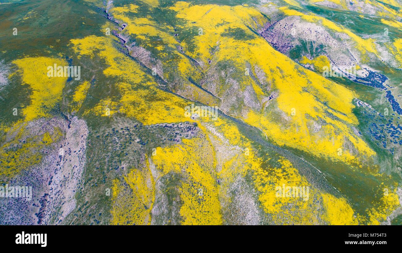 Fioriture di fiori selvaggi nella gamma Temblor, Carrizo Plain monumento nazionale, California Foto Stock