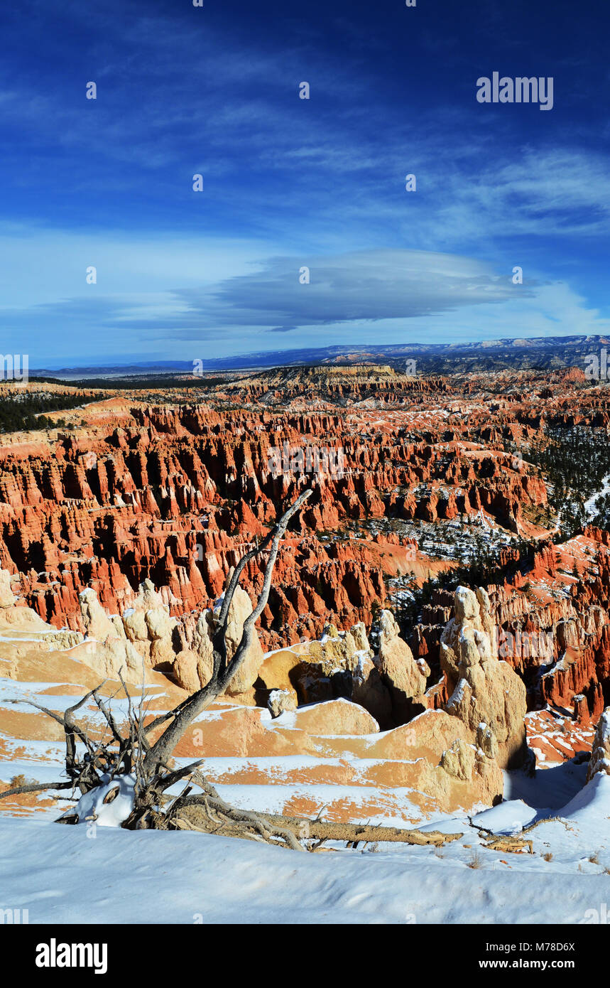 Bryce Canyon durante l'inverno. Immagini Stock