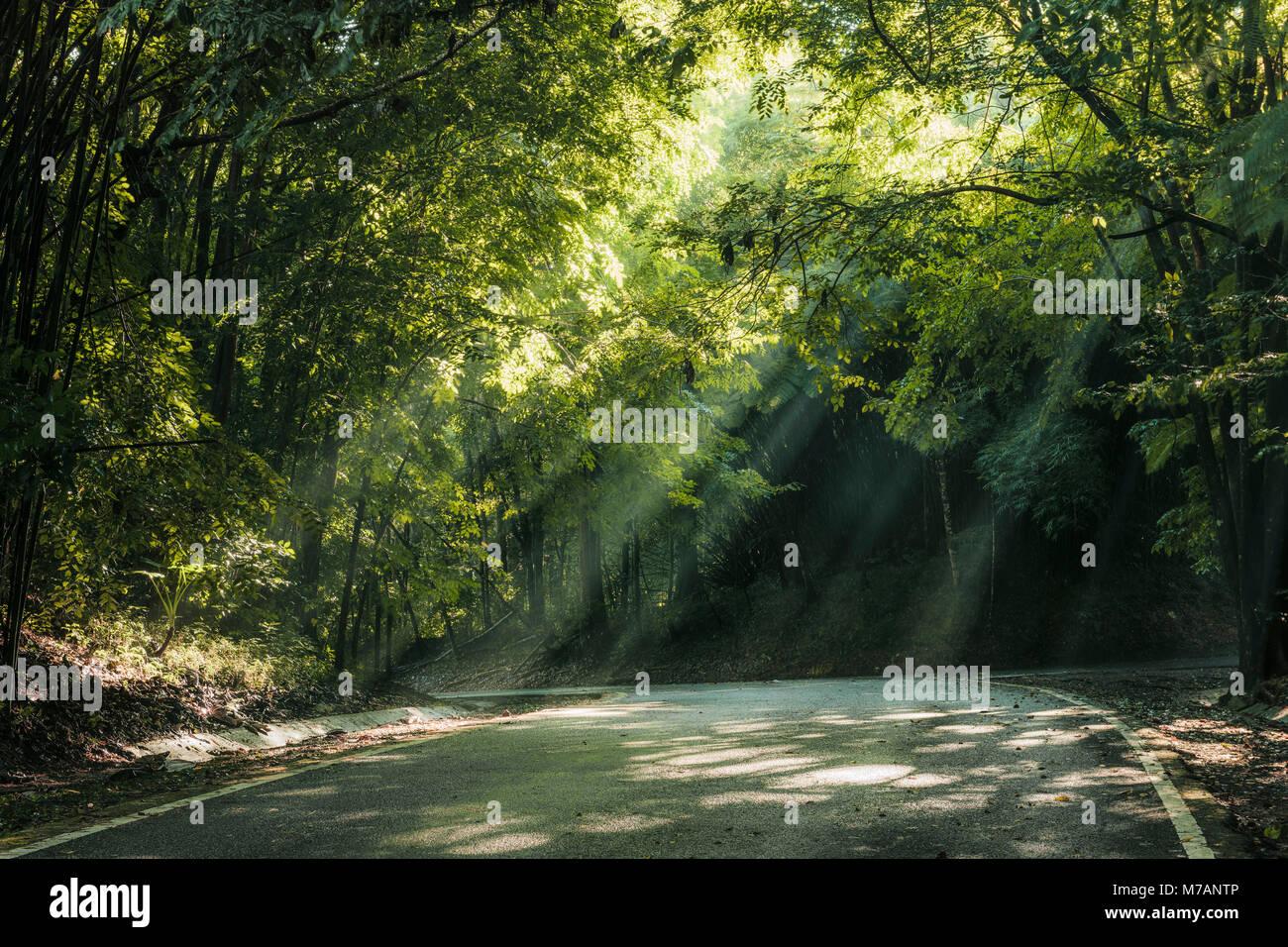 Percorso di foresta con raggi di luce nel Yunque National Park, isola dei Caraibi Porto Rico Immagini Stock