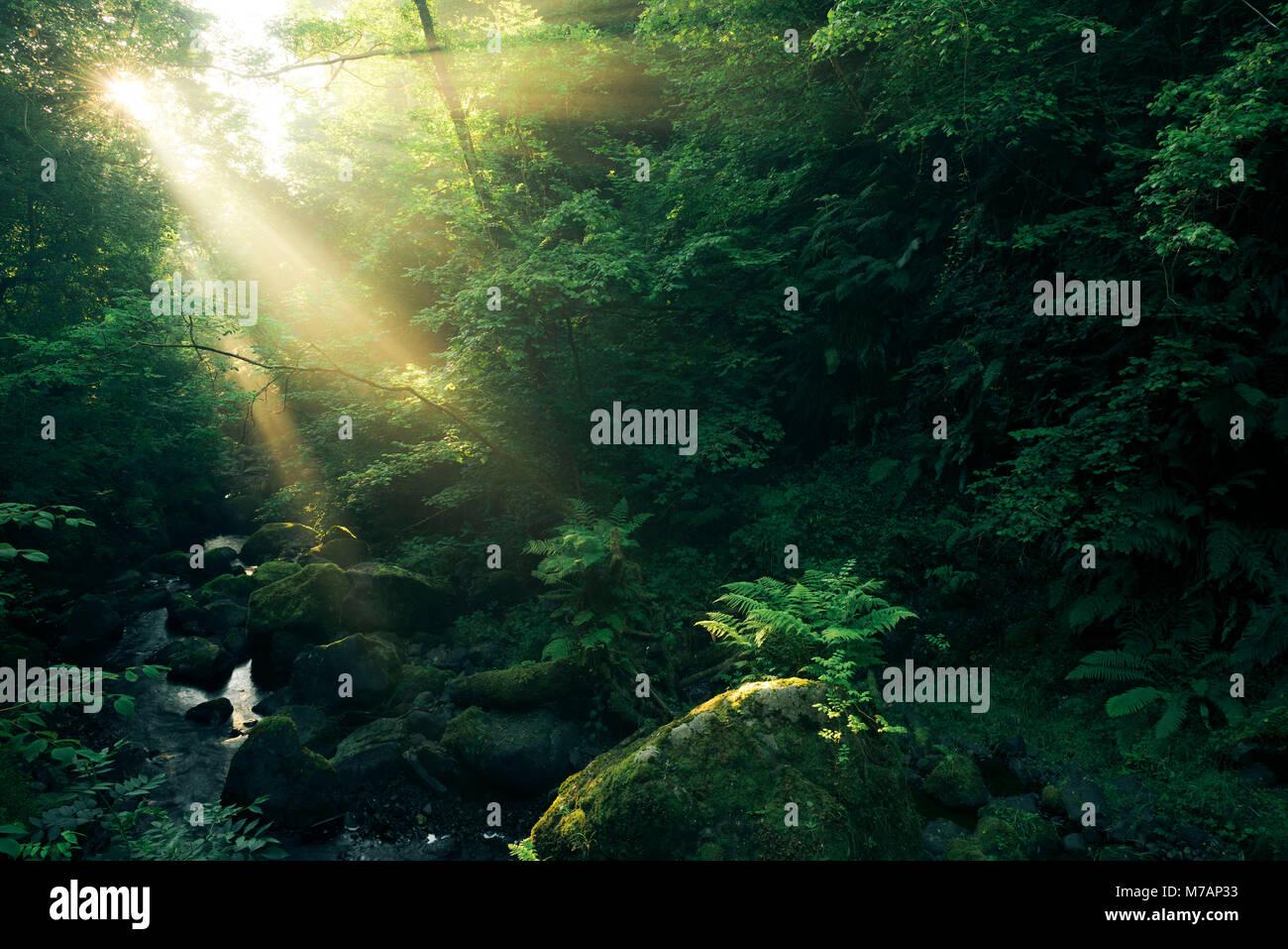 Foresta con corsi d'acqua e raggi di Dio al Cranny cade, Antrim, Irlanda del Nord Immagini Stock