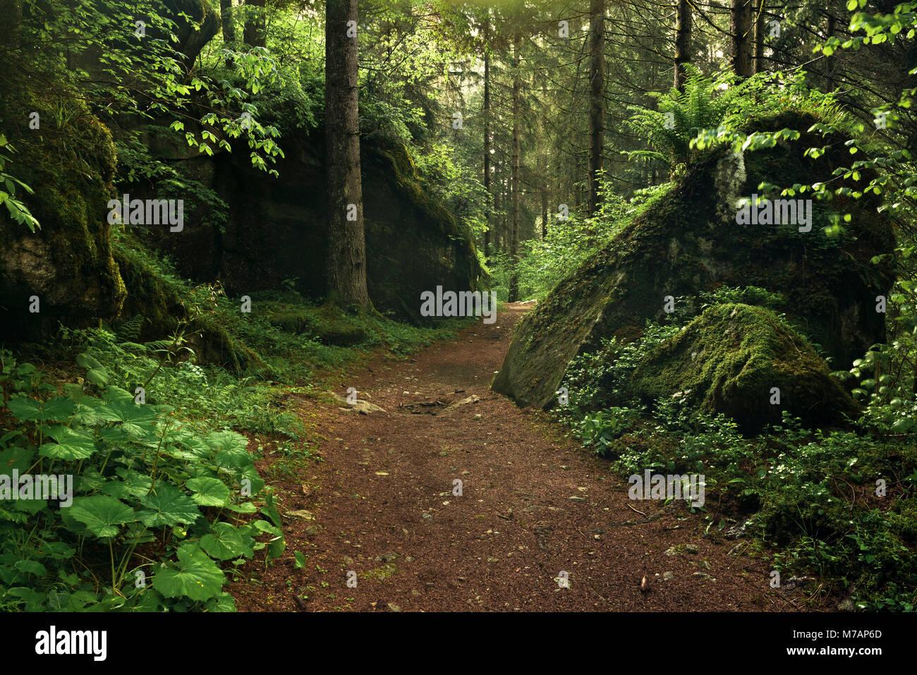 """Percorso da sogno nella foresta di """"la Valle delle Cascate', Val Genova, Italia Immagini Stock"""