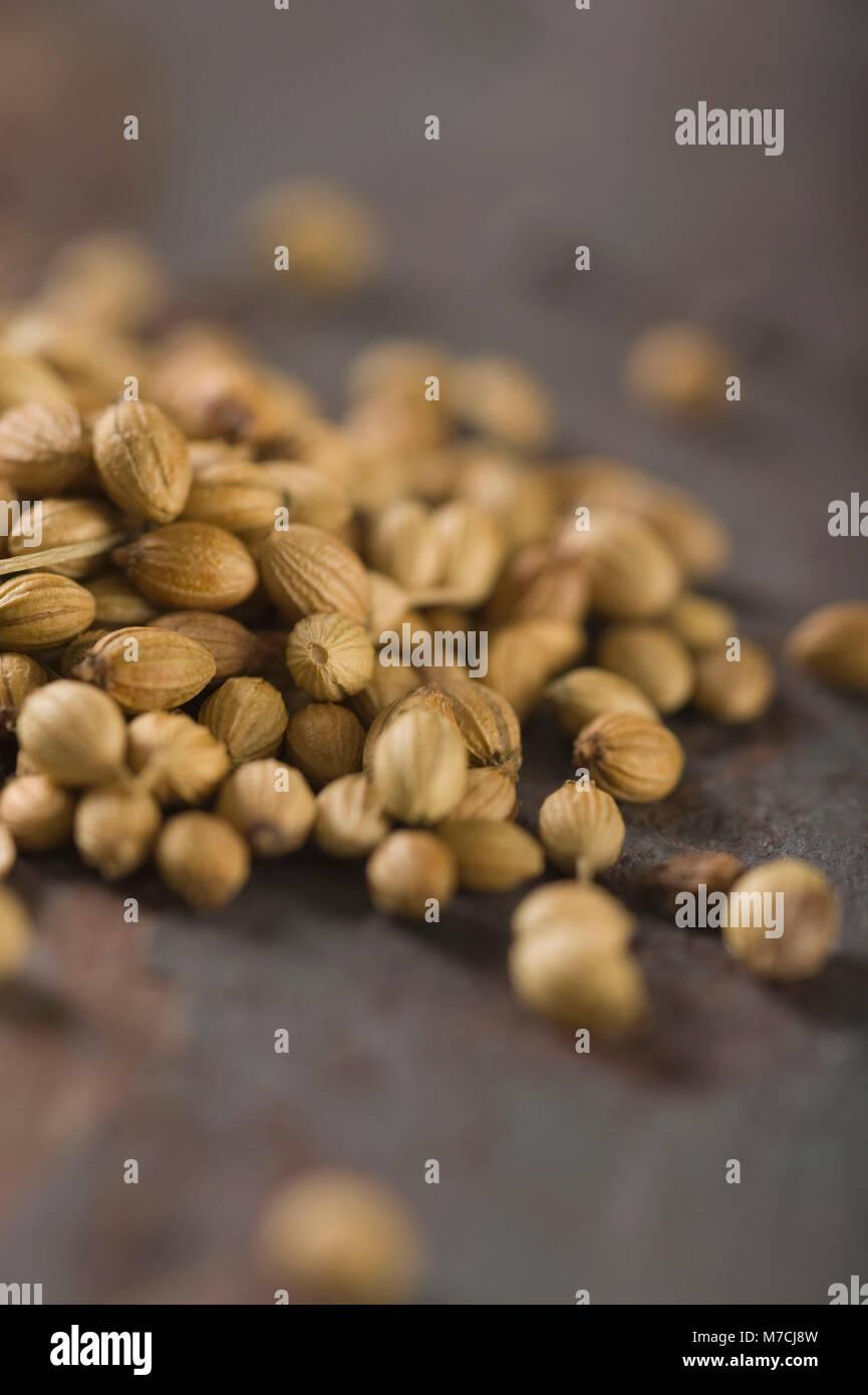 Close-up di semi di coriandolo Immagini Stock