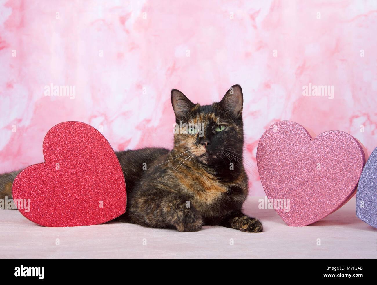 Adorabili Tartaruga Tortie Cat Posa Sulla Coperta Rosa In Marmo Con