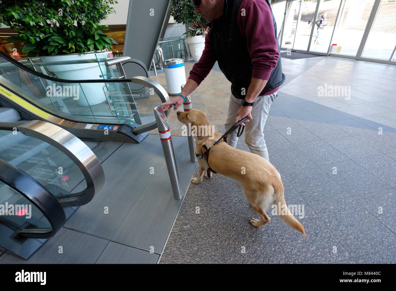 Persona cieca con cane guida Immagini Stock