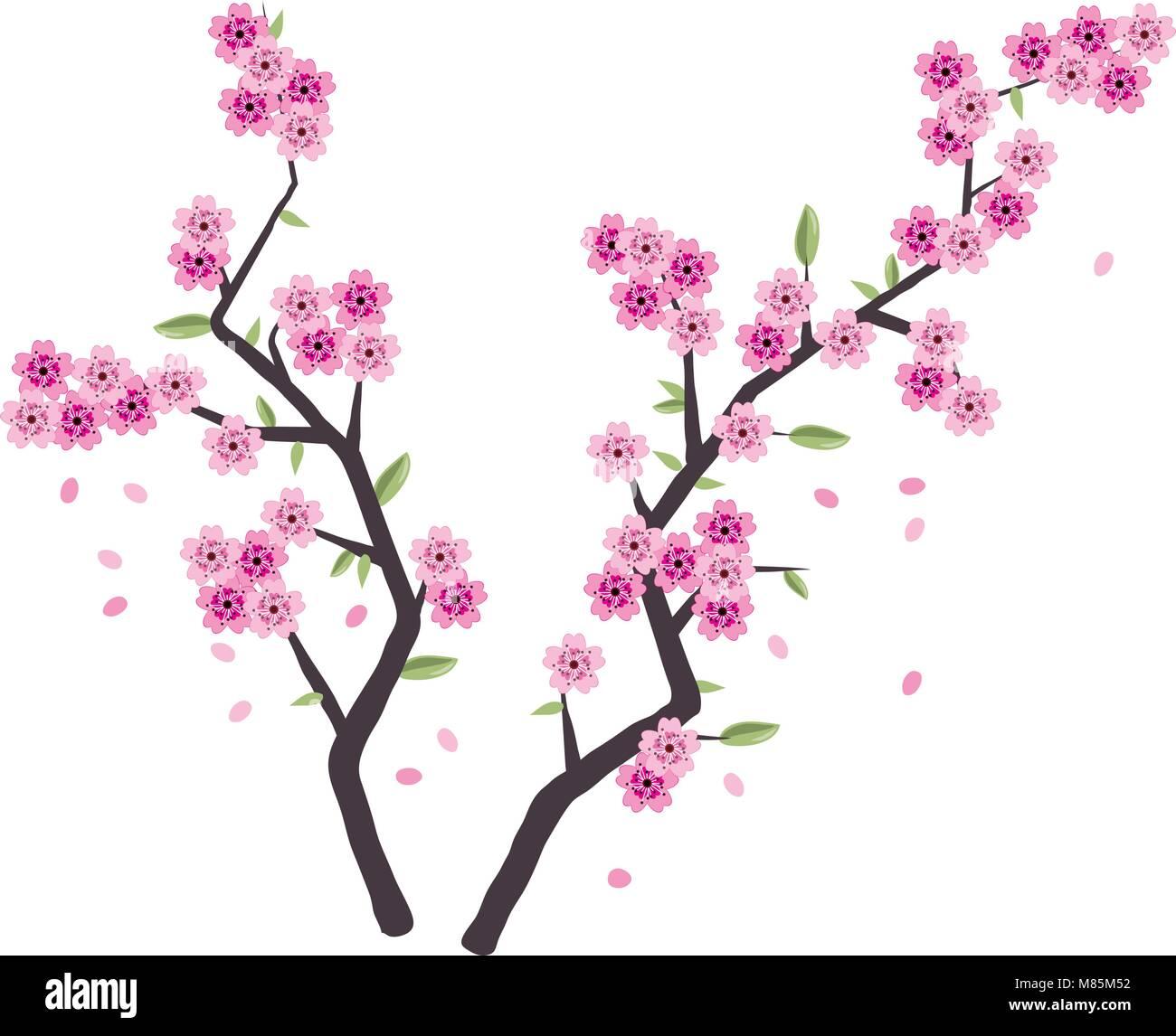 Vector Sakura Rami Con Fiore Rosa Isolato Su Sfondo Bianco Ciliegio