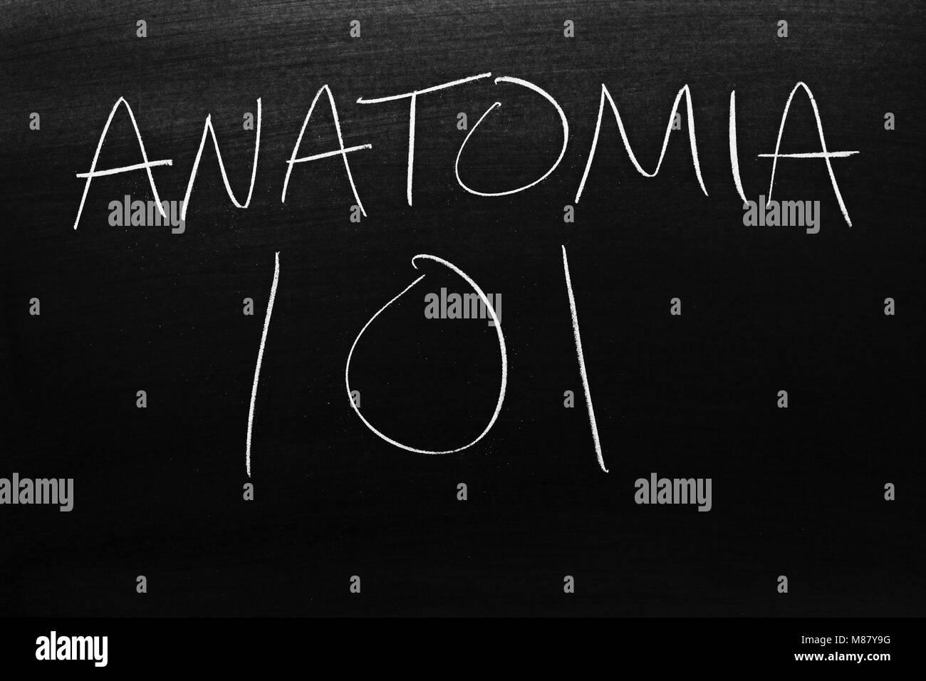Le parole Anatomia 101 su una lavagna in Chalk Immagini Stock