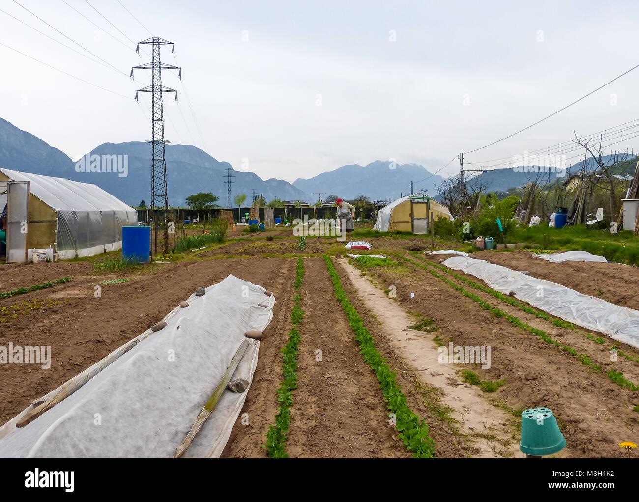 Giardini sociale (comunità) situato in uno spazio pubblico e assegnati alle persone anziane. Favorisce la socializzazione Immagini Stock