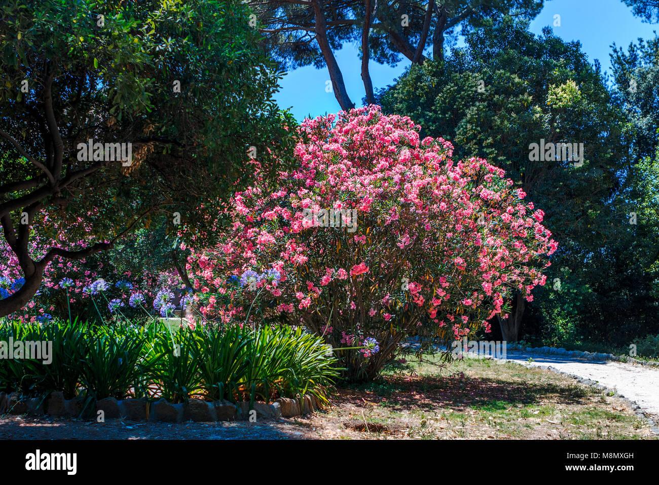 Il giardino di mia a roma menu prezzi immagini recensioni e