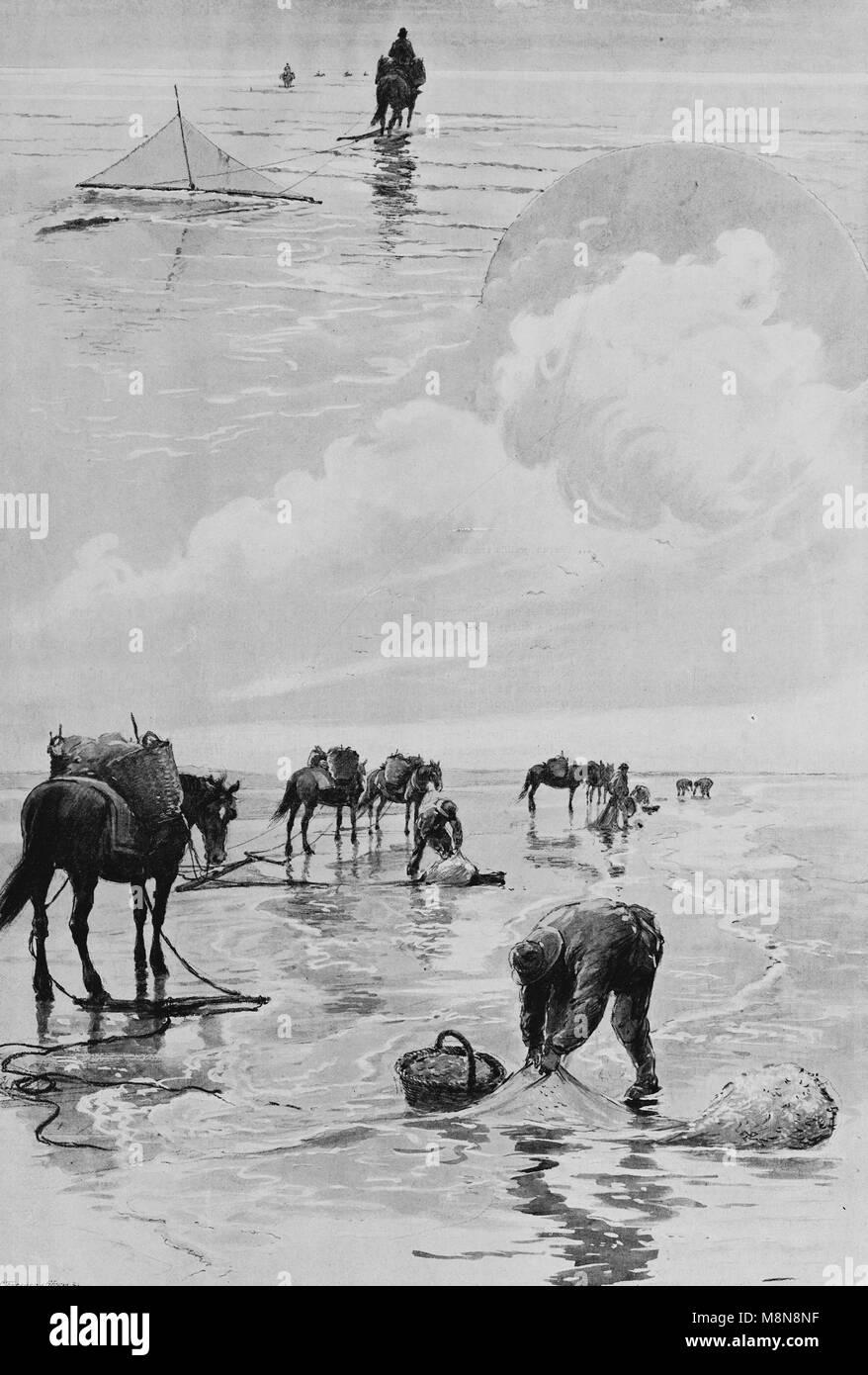 Tradizionale pesca di gamberetti a cavallo, immagine dal settimanale francese quotidiano l'illustrazione, 1 Immagini Stock