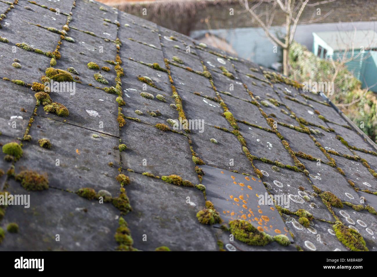 Verde muschio e alghe sul tetto in ardesia piastrelle foto