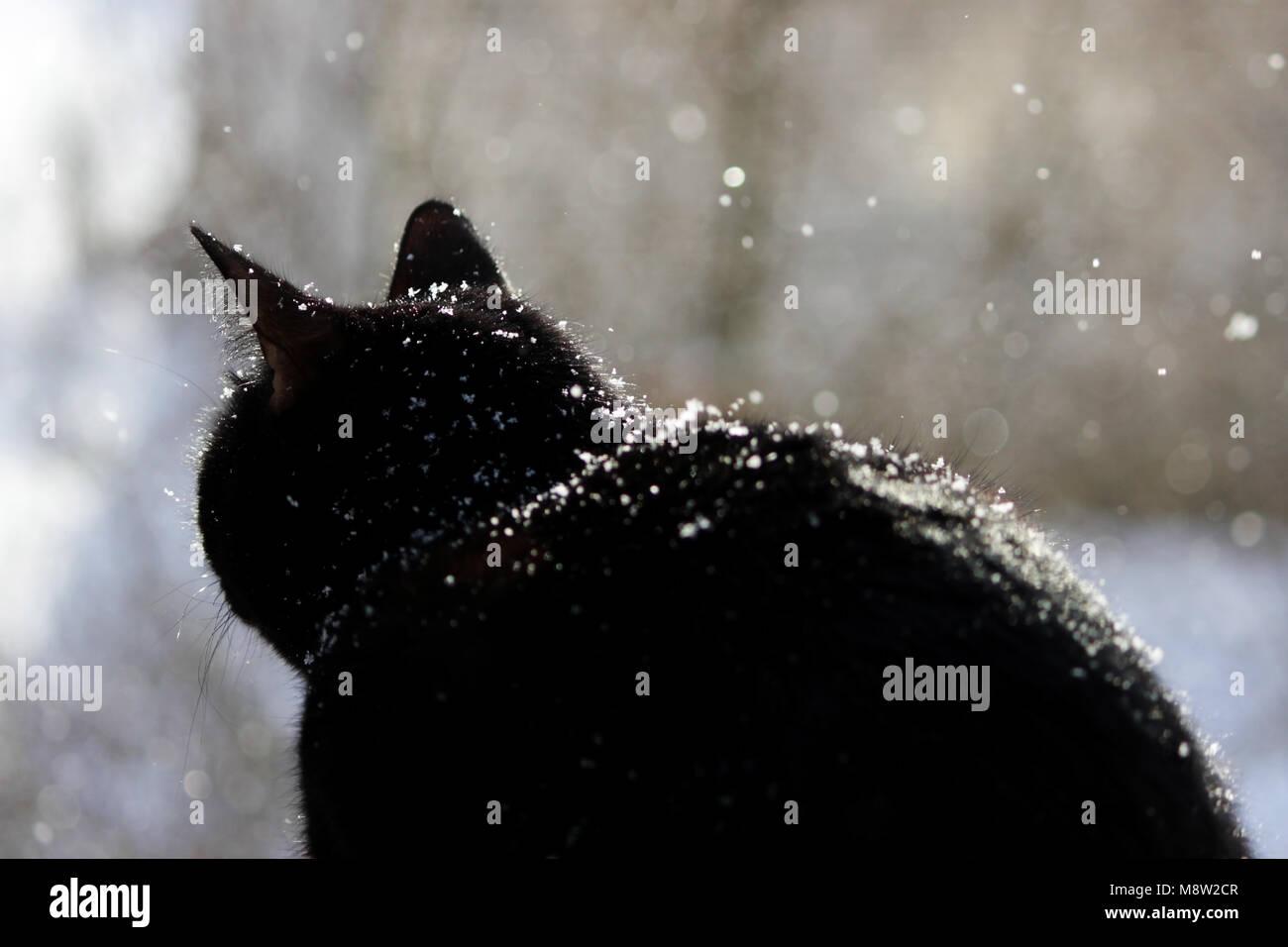 Dilettante nero micio mangiare